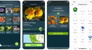 Seek — «шазам» для флоры и фауны